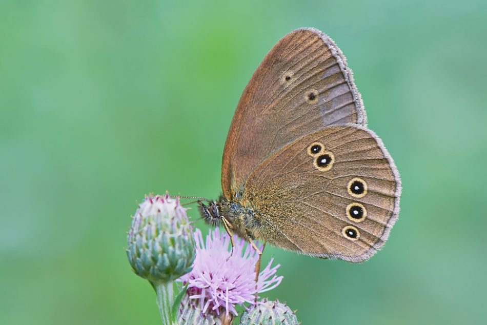 The Flutterby